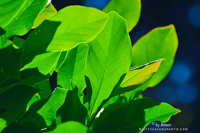 Green Veines