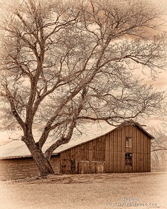 Beneath the Old Oak