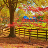 Autumn at the Fence