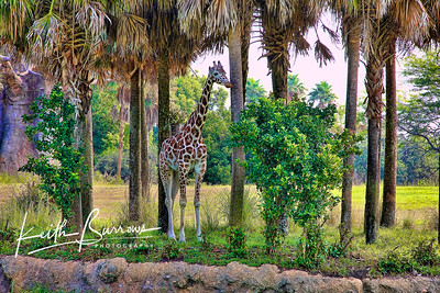 Animal Kingdom 1
