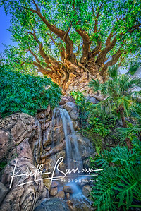 Tree of Life Waterfall-
