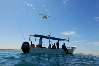Looking for Whale Sharks with the aid of a spotter plane.