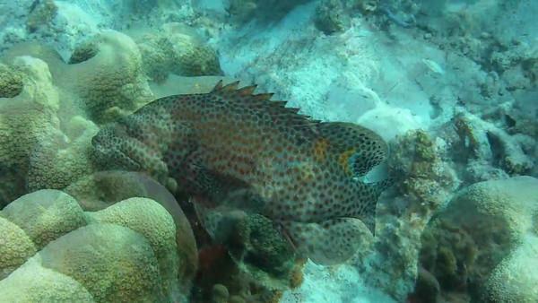 Bonaire 2012 (HD 720p)