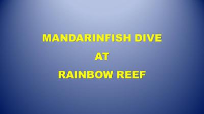 4 - Mandarinfish