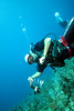 Dive Master killed 10 lionfish on this dive in Roatan