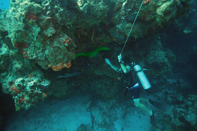 Luis preparing to fondle a green moray in Cozumel.