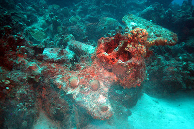 The encrusted anchor from the Hilma Hooker.  Anchor is at the Angel City dive site, just south of the Hooker site.