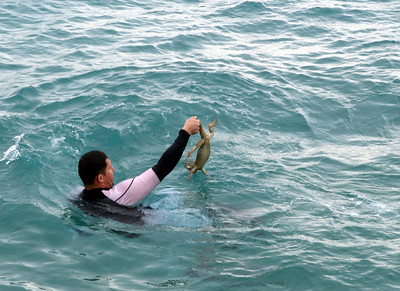 """An iguana walks into a bar and says """" . . . so I'm out for my afternoon swim and this dufus do-gooder decides he needs to save me, jumps into the water and grabs me by my tail . . . WTF . . ."""""""
