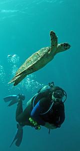 BJ and hawkbill turtle