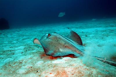 Grand Cayman - November, 2016