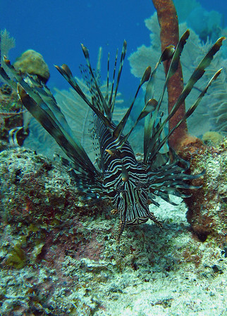 One of the many Lion Fish we were able to run into