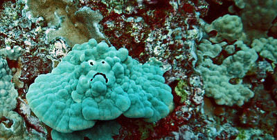 Curious 'sad-face' appearance on crust coral formation