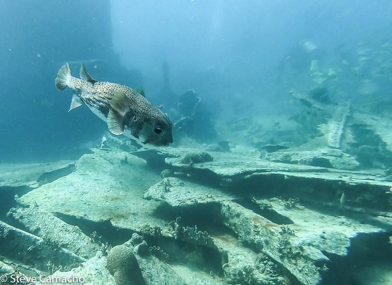 Aruba GoPro-25.jpg