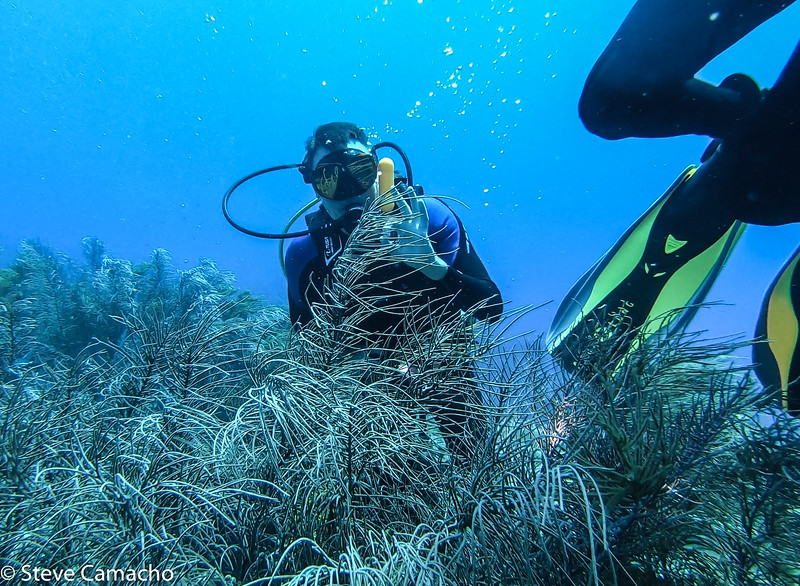 Aruba GoPro-60.jpg