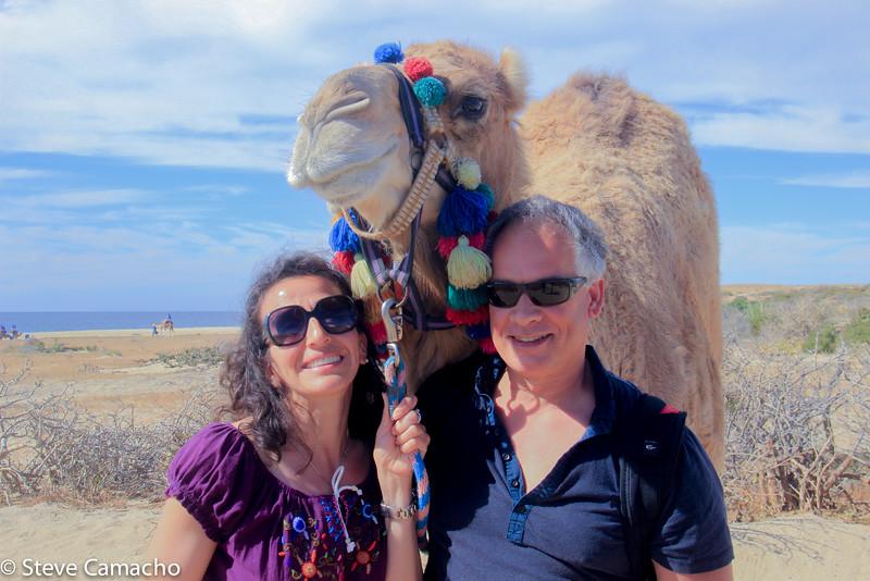 Le camel