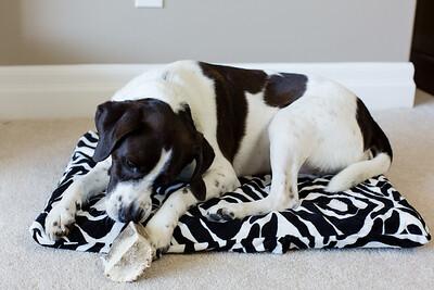 DIY Dog Bed-5278