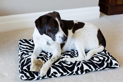 DIY Dog Bed-5264