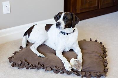 DIY Dog Bed-5248