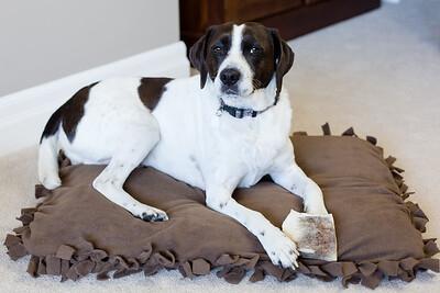 DIY Dog Bed-5250