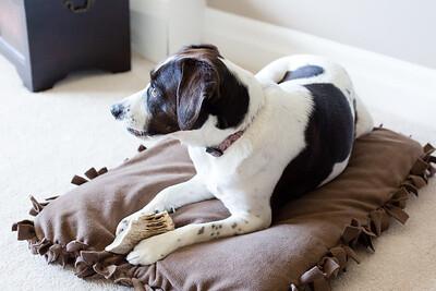 DIY Dog Bed-5237