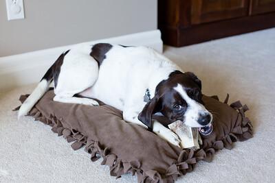 DIY Dog Bed-5230