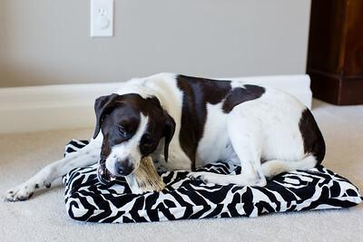 DIY Dog Bed-5256