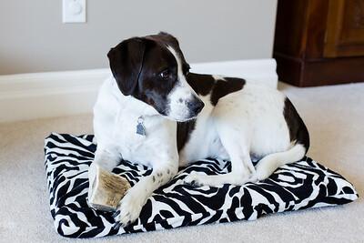 DIY Dog Bed-5263
