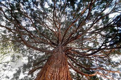 0406_Trees_01
