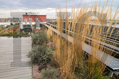 0801_Green_Roofs_02