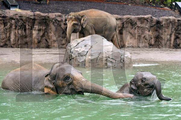 1218_Elephant_Lands_01