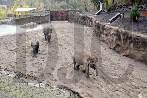 1218_Elephant_Lands_02