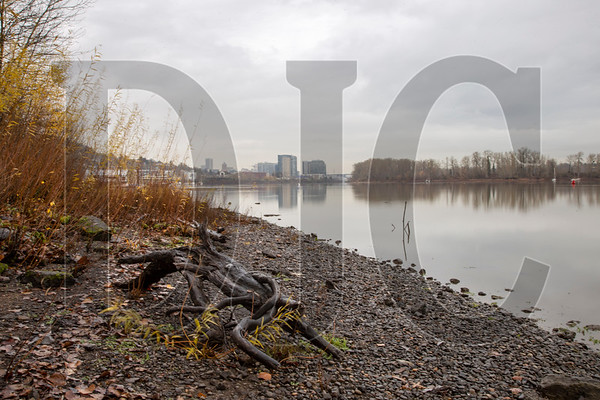 An effort is under way to improve access to a stretch of the Willamette River in Portland between the Ross Island Bridge and the unincorporated area of Dunthorpe. (Sam Tenney/DJC)