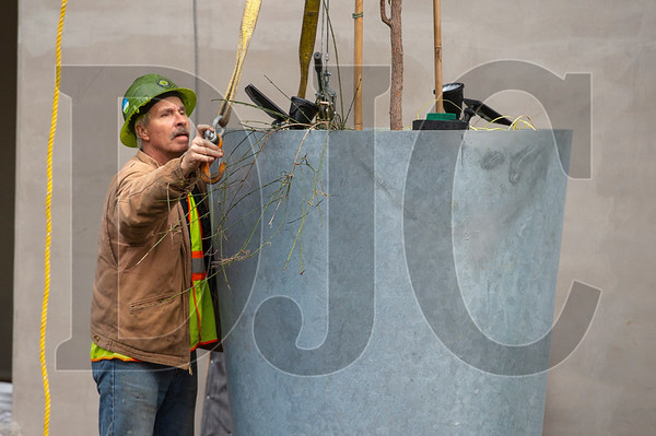 Gary Trottier, president of Tree Farm general contractor ProTeck Construction, rigs a planter for installation. (Josh Kulla/DJC)