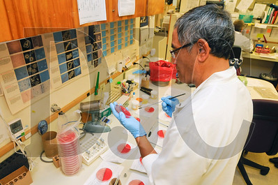 Gary Funatake, a medical technologist in the Multnomah County Health Department, tests urine samples for the presence of bacteria in a laboratory at the department's headquarters in the McCoy Building in downtown Portland Tuesday. According to lab manager Kathie Raisler, the top-floor space is so prone to moisture problems that staff members cover equipment with plastic tarps during times of heavy rainfall.