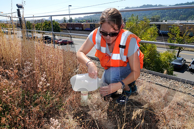 0902_Green_Roof_Research_01.jpg
