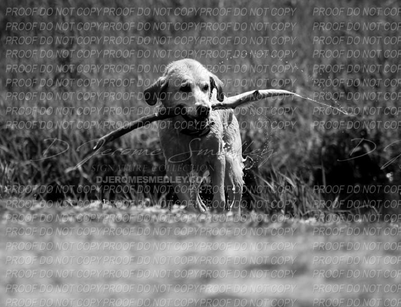 Fetch by D Jerome Smedley