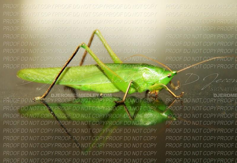 Grasshopper Hopped Out