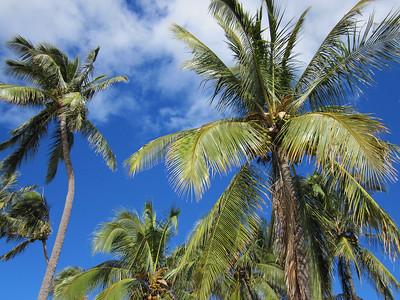Palm Jim Durrant
