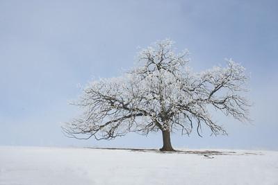 Lone Tree Cara Pusateri