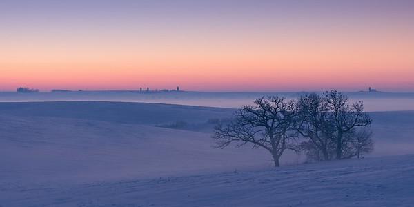 Tree in fog Will Hoyer