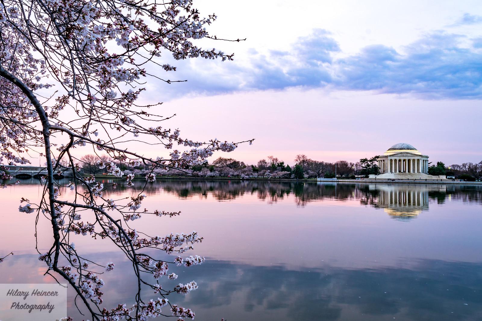 Cherry Blossoms Sunrise 1