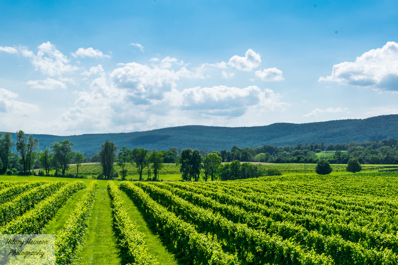 Virginia Winery 1