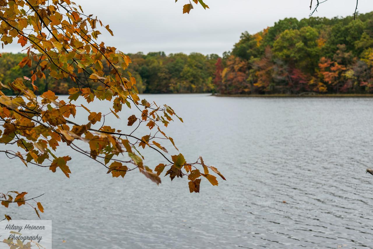 Burke Lake 4