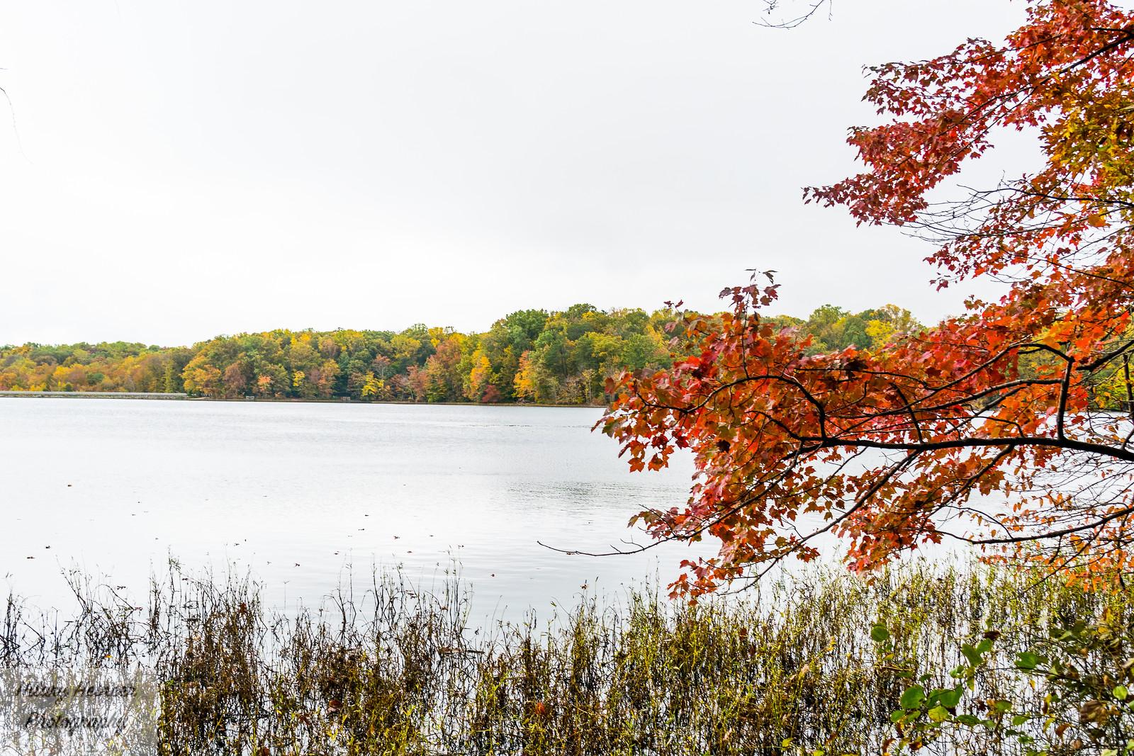 Burke Lake 6