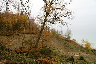 Eftersom der er tale om urørt skov, må kommunen ikke bjerge træer på vej ned i Lillebælt.