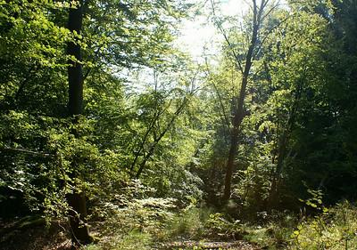 Her er træer på vej til at skride ned ad skrænten.