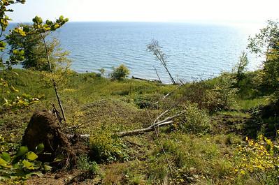 Det plastiske ler får skrænten - og skoven - til at skride i Lillebælt.