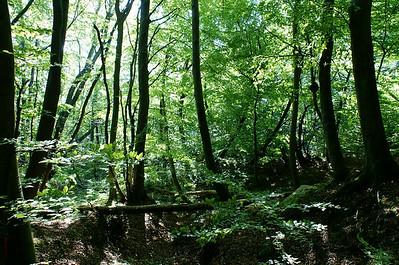 Her kan du se fotos fra Trelde Landskabspark. Den største udfordring er at bevare livsvilkårene for de mange sjældne og udryddelsestruede gøgeurter og svampe. En af forudsætningerne er, at der til stadighed er mange store ege og bøge - og også døde træer. I kommunens del af skoven er der nu urørt skov langs Lillebælt, og vi håber, at de private skovejere også vil udlægge urørt skov.Og skulle forsvaret ikke længere have brug for Hyby Fælled, er det en selvfølge, at vi rejser en fredningssag - helst i samarbejde med kommunen.Læs vores oplæg til Fredericia Byråd.