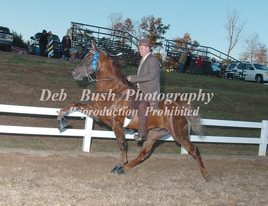CLASS 19  4 YR OLD OPEN SPECIALTY