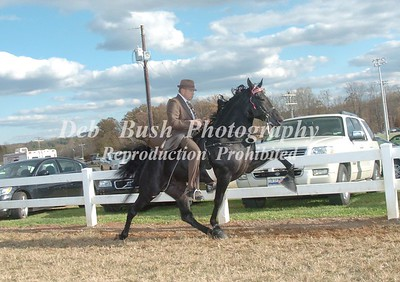 CLASS 4  THREE YEAR OLDS OPEN